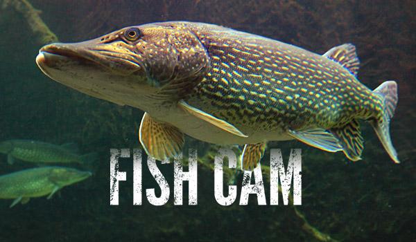 LIVE CarbonTV Fish Cam