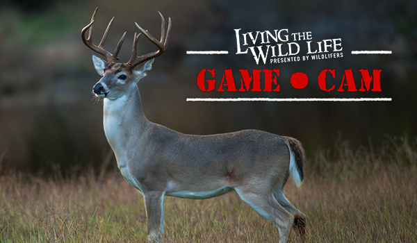 Wildlifers Living the Wild Life Live Game Cam