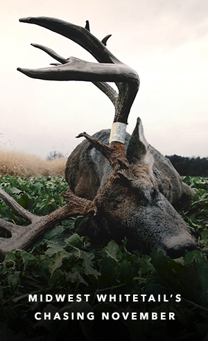 Midwest Whitetail's Chasing November
